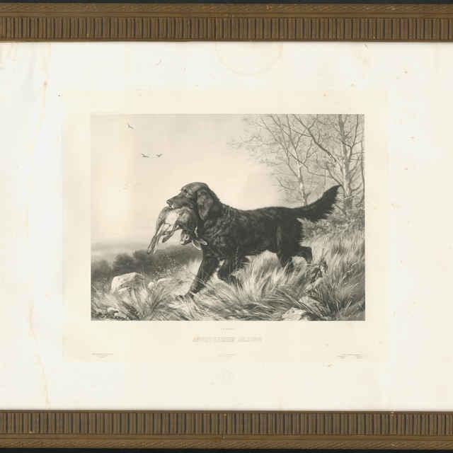 Prinášanie poľovníckym psom
