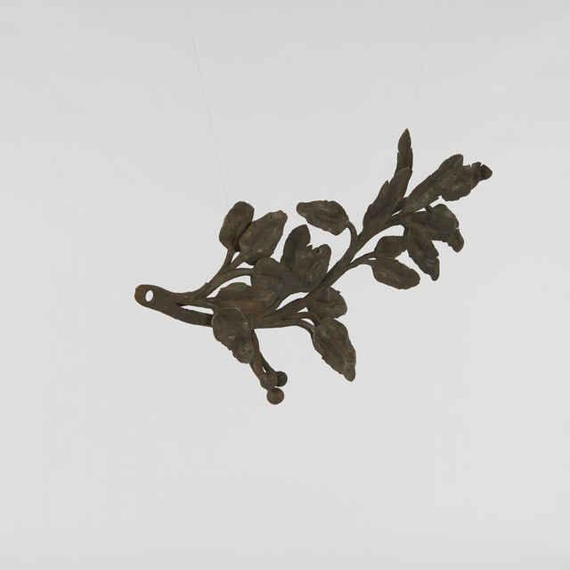 Orvok ozdobný-vavrínová vetvička