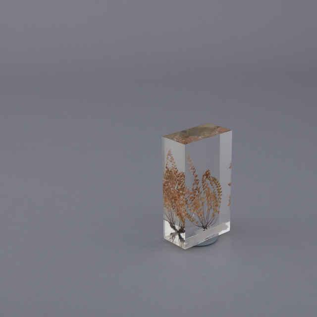 Asplenium viride