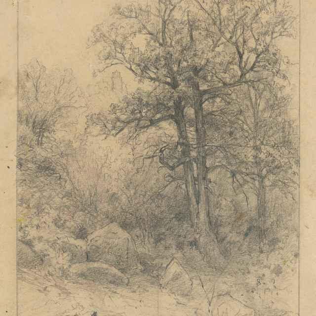 Štúdia košatých <u>stromov</u>