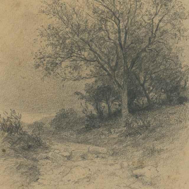 Košatý strom pri ceste - Čordák, Ľudovít