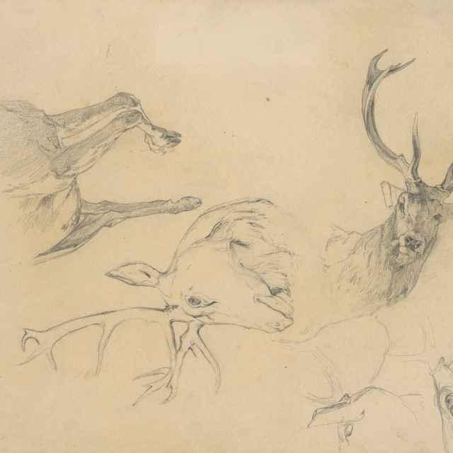 Štúdia jeleních hláv - Čordák, Ľudovít