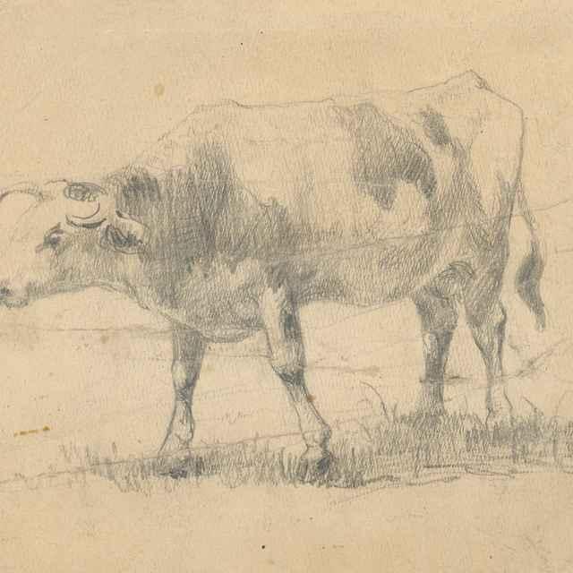 Štúdia kravy - Čordák, Ľudovít