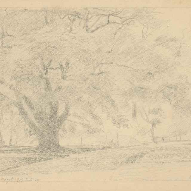 Košatý strom - Czölder, Dezider