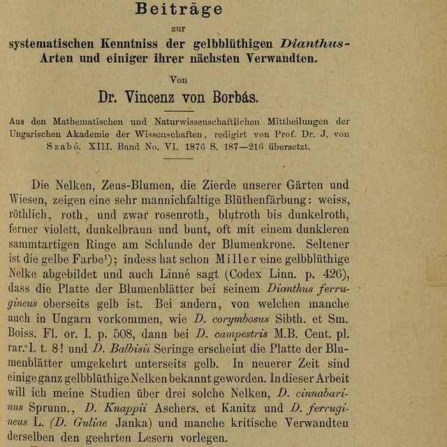 Beiträge zur systematischen Kenntniss der gelbblüthigen Dianthus-Arten und einiger ihrer Verwandten - Borbás, Vincze