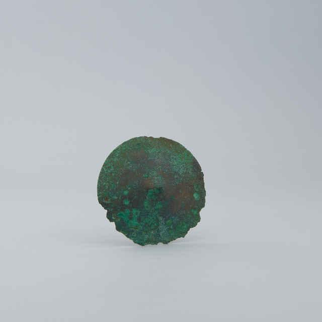 puklica bronzová