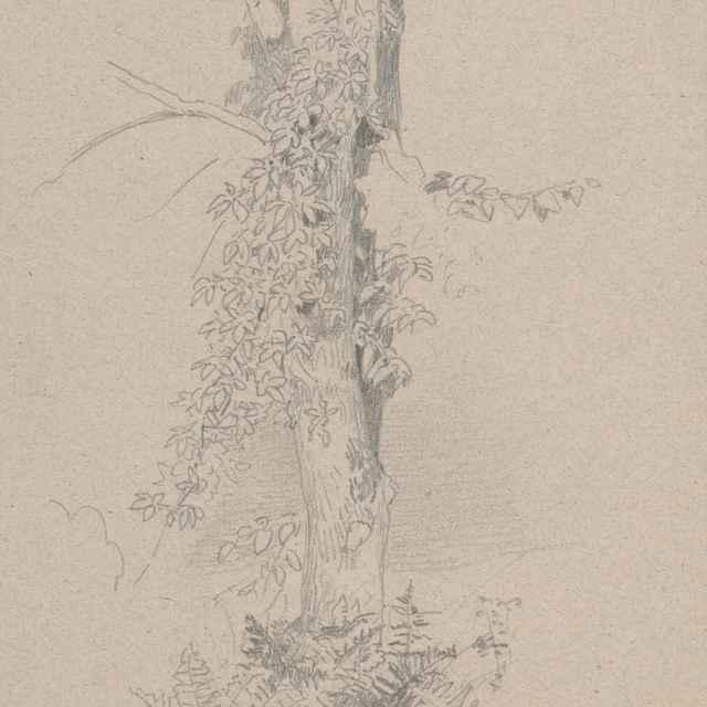 Štúdia kmeňa stromu