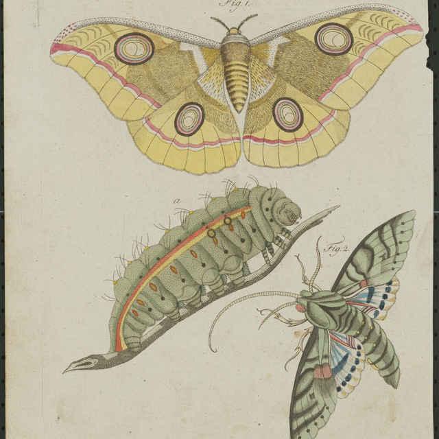 Fauna (rytina) - Schmutzer, Jacob