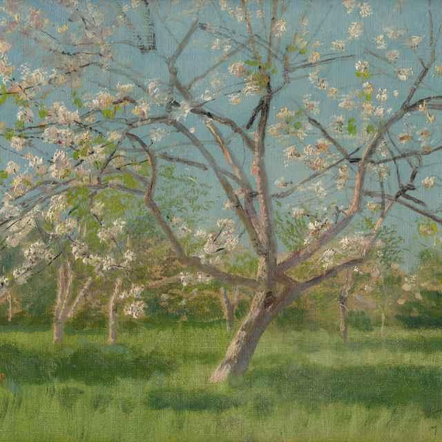 Štúdia rozkvitnutých stromov v sade - Mednyánszky, Ladislav