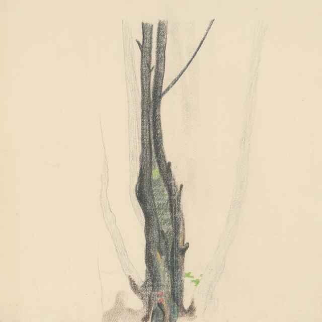 Štúdia <u>stromu</u>