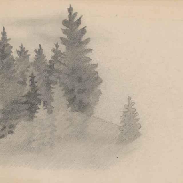 <u>Stromy</u> v lese