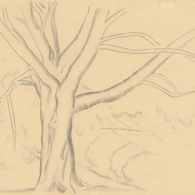 Starý strom - Galanda, Mikuláš