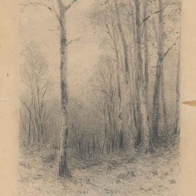 Štúdia stromov - Čordák, Ľudovít