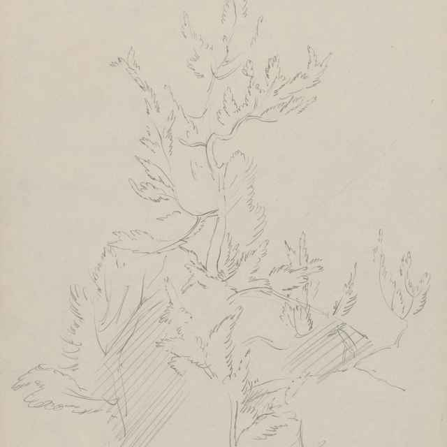 Stromy - Novák, Ján
