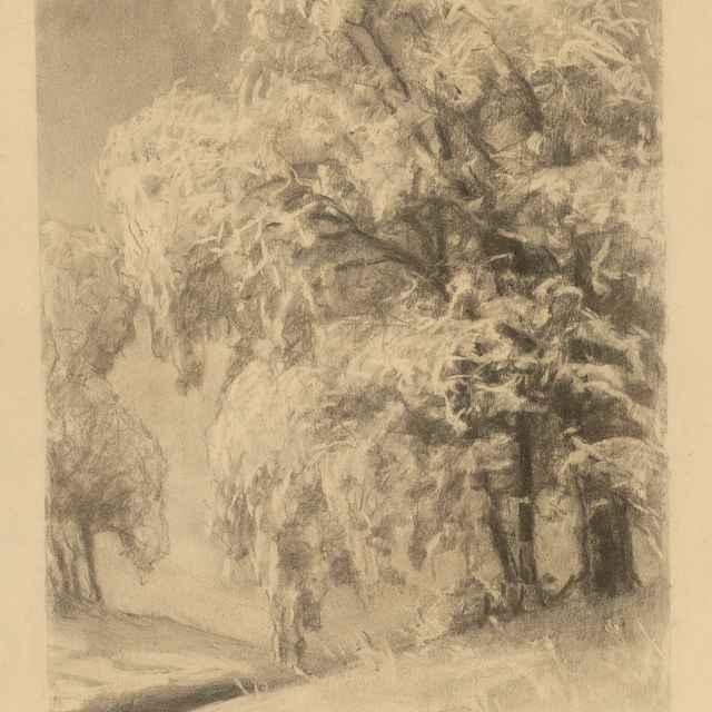 Stromy v zime - Čordák, Ľudovít