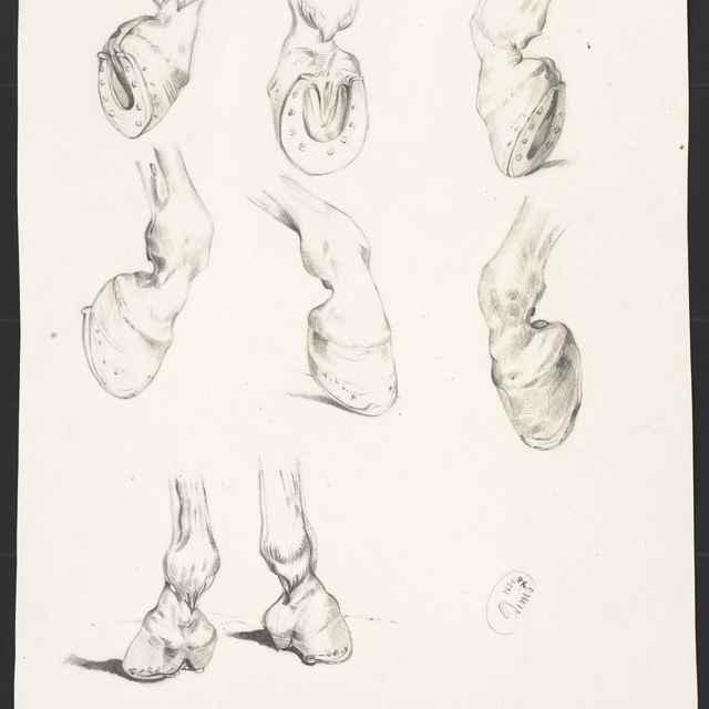 Ceruzokresba, Dionýz Andrássy: Štúdia konských kopýt, 1850 - Andrássy, Dionýz