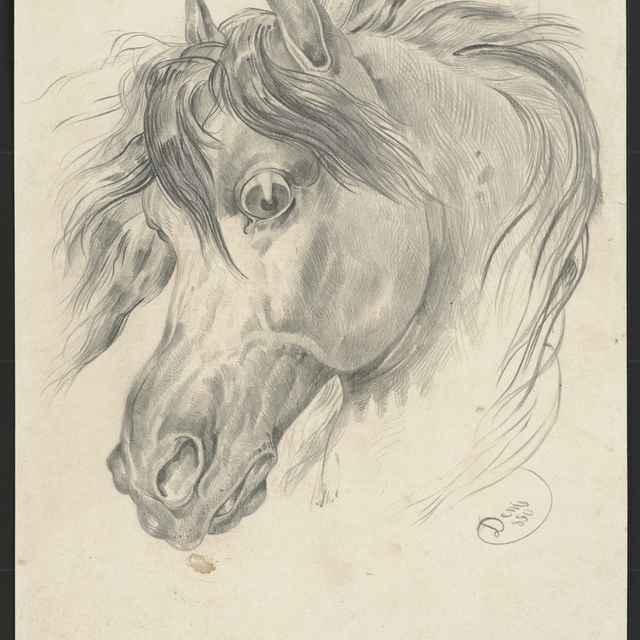 Ceruzokresba, Dionýz Andrássy: Hlava koňa, 1850 - Andrássy, Dionýz