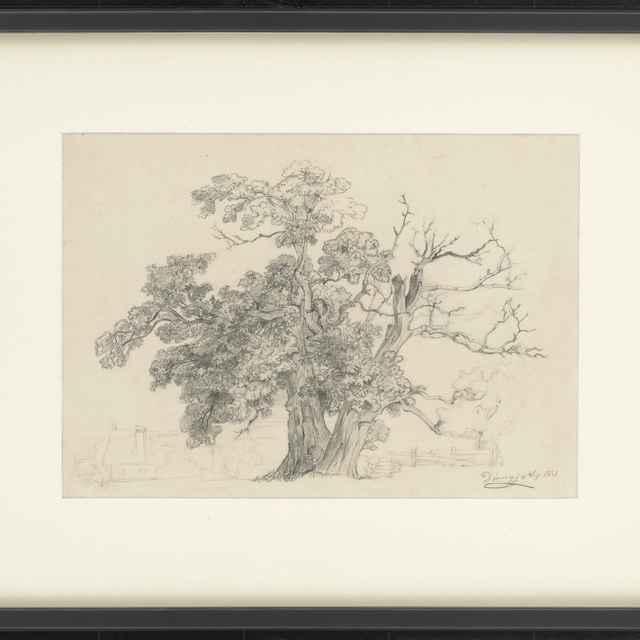 Ceruzokresba, Dionýz Andrássy: Dva stromy, 1851 - Andrássy, Dionýz