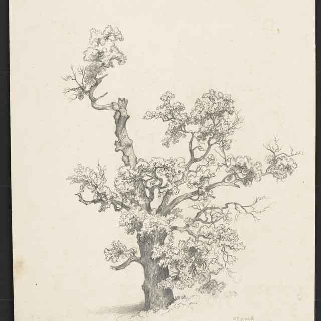 Ceruzokresba, Dionýz Andrássy: Strom, 1851 - Andrássy, Dionýz