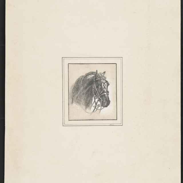 Ceruzokresba, Dionýz Andrássy: Hlava koňa - Andrássy, Dionýz