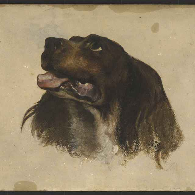 Akvarel, Hlava psa, 1855 - Andrássy, Dionýz
