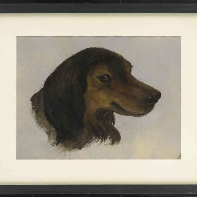 Akvarel, Hlava psa, 1856 - Andrássy, Dionýz