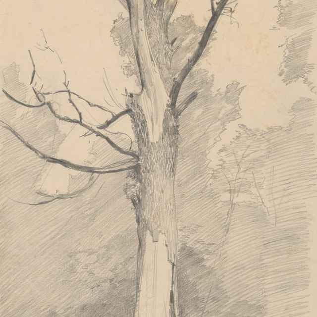 Štúdia suchého stromu - Mednyánszky, Ladislav