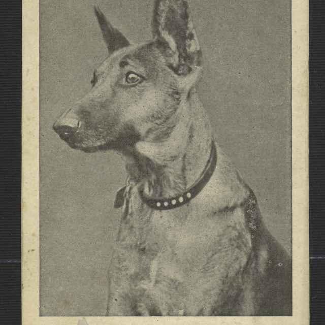 Pohľadnica: herec - <u>pes</u> Rin-tin-tin