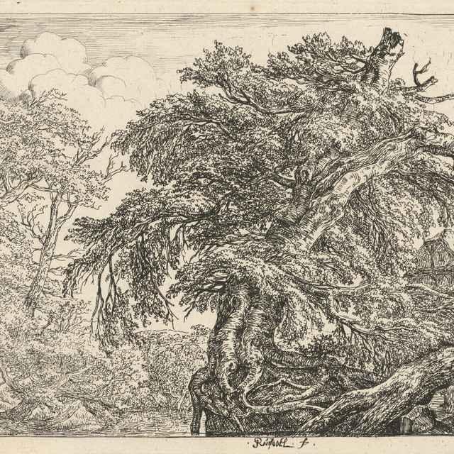Starý les (Dvaja sedliaci so psom) - Ruisdael, Jacob Isaackszon van