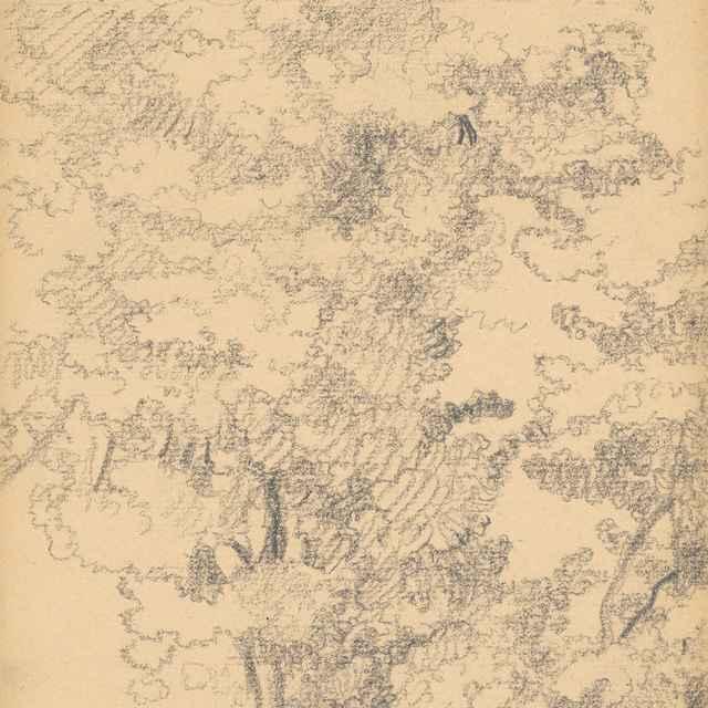 Listnaté stromy - Žabota, Ivan