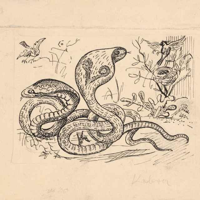 Príbehy v divočine - 4 - Weisz-Kubínčan, Arnold Peter