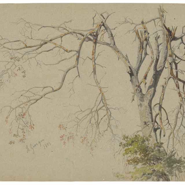 Strom s nalomenými haluzami. Motív zo Sv.Jura - Scheidlin, Friedrich Carl von
