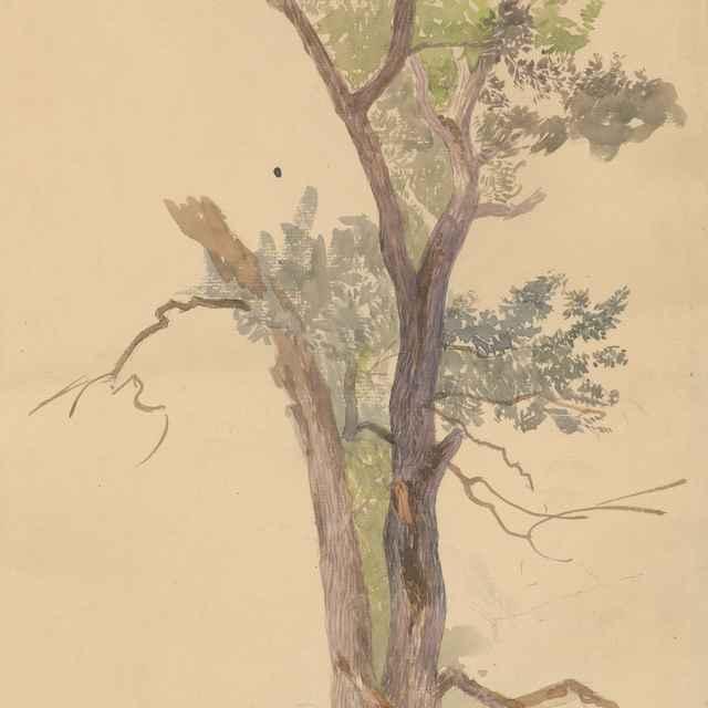 Štúdia vysychajúceho stromu - Katona, Ferdinand