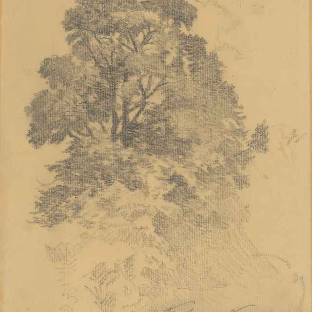 Štúdia stromu - Katona, Ferdinand