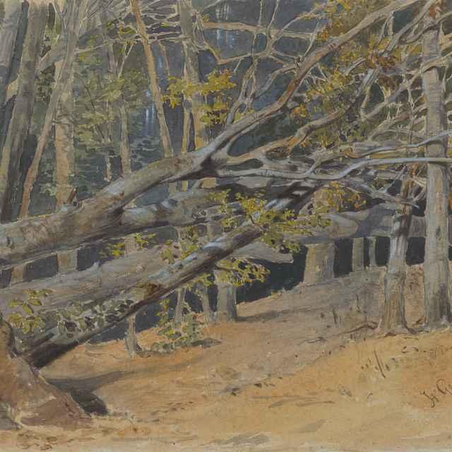 Štúdia vyrúbaných stromov - Scheidlin, Friedrich Carl von