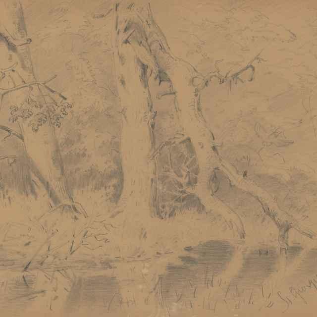 Lesné zákutie so zlomeným stromom - Scheidlin, Friedrich Carl von
