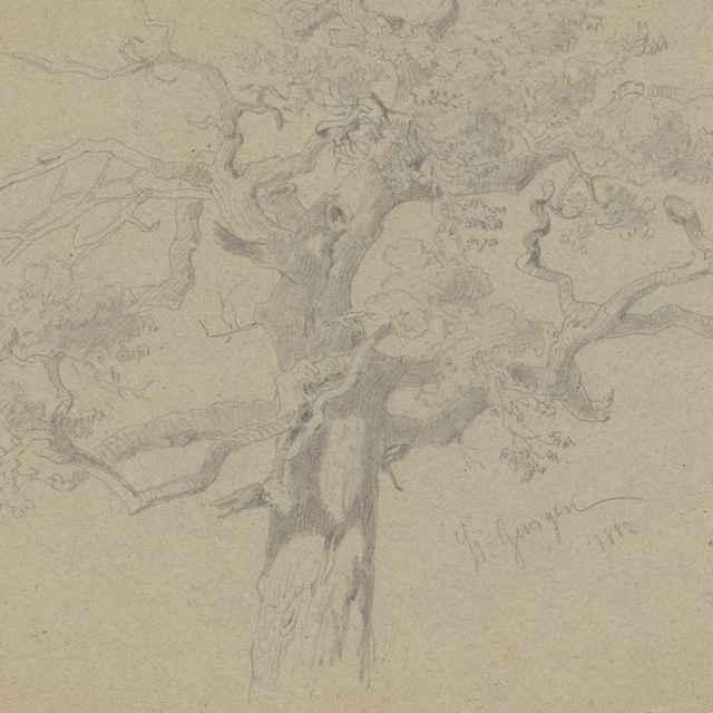 Strom s uzlovitými haluzami - Scheidlin, Friedrich Carl von