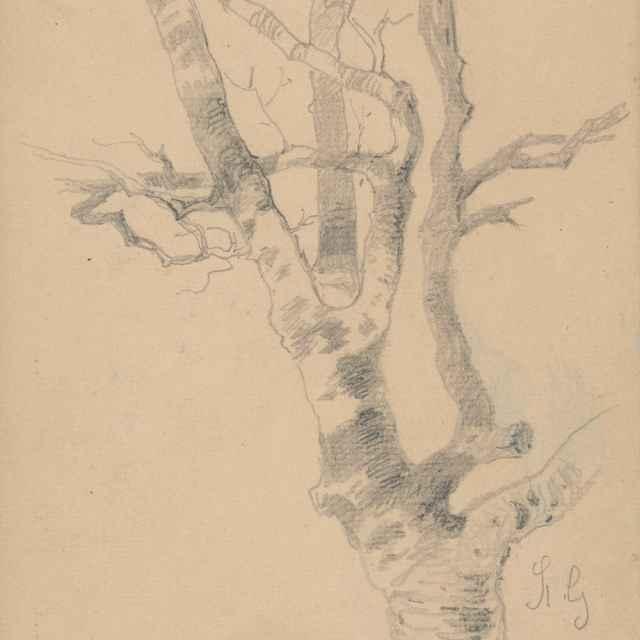 Štúdia stromu - Scheidlin, Friedrich Carl von