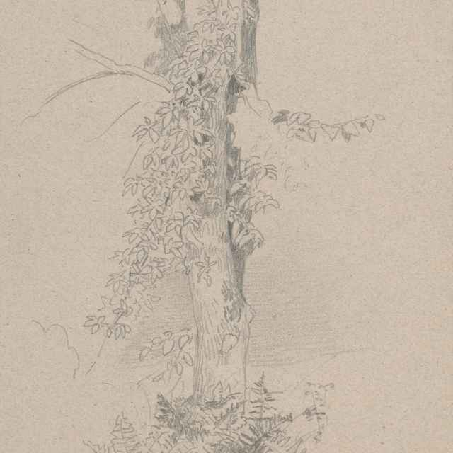 Štúdia kmeňa stromu - Novopacký, Jan