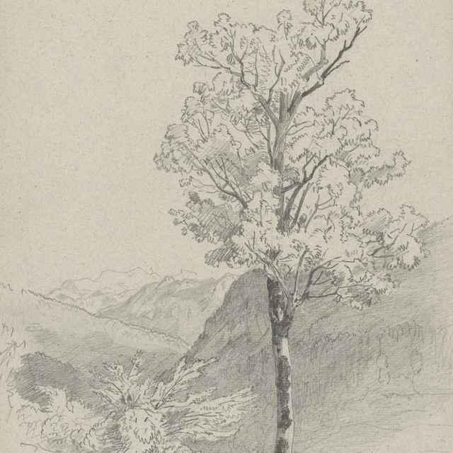 Horská krajina v popredí s listnatým stromom - Novopacký, Jan