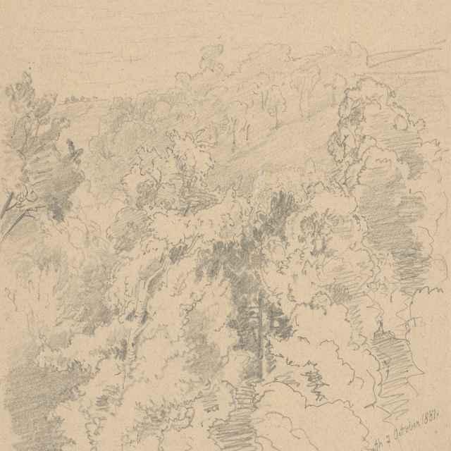 Stráň s listnatými stromami - Novopacký, Jan