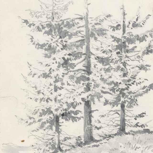 Štúdia troch stromov - Scheidlin, Friedrich Carl von