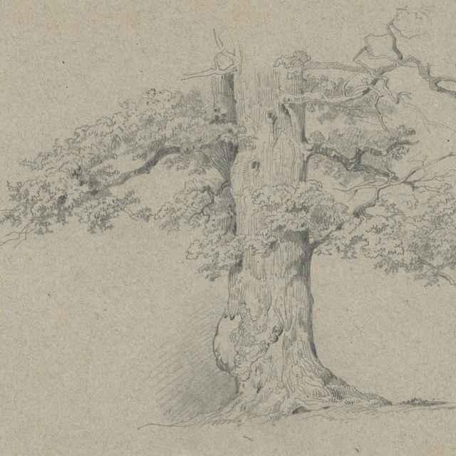 Štúdia starého listnatého stromu - Scheidlin, Friedrich Carl von
